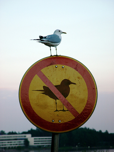 True rebel