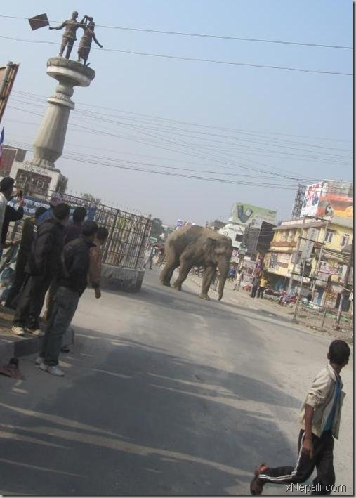 Wild Elephants Roamed Birtamod City Nepali Movies Films