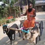 Eco-friendly vehicle – goat chariot
