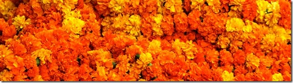 flowers tihar