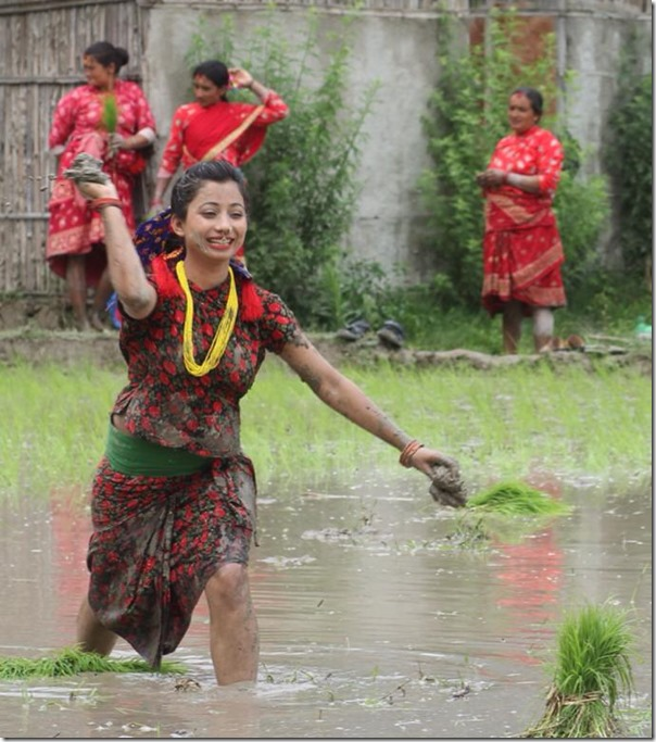 Beauty In Paddy Field, Nepali Actress Photo Shots In Asar