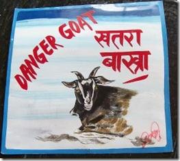 danger-goat