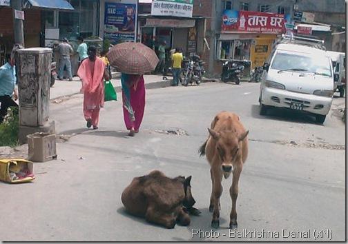 Baneshowr_Shankhamul_KNP