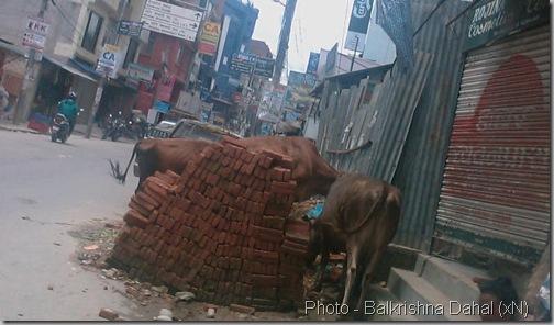 Baneshowr_Shankhamul_KNP_2