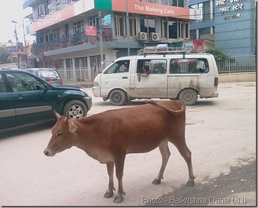 cosmopolitian_road_bhat_bhateni