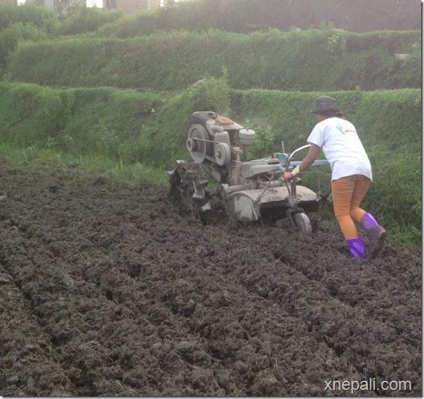 binita baral plowing field 1