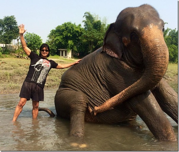rajesh hamal with elephant